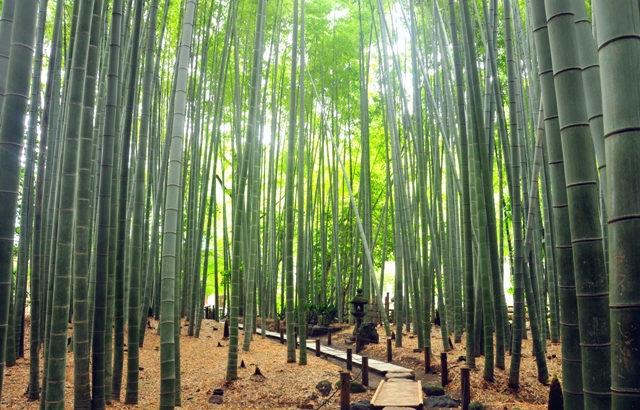 介紹讓您感受「日本」的旅遊景點!【關東編】