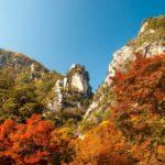 駕車旅遊的季節!想在秋天體會感動的楓葉景點【關東編】
